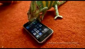iphone vs chameleon