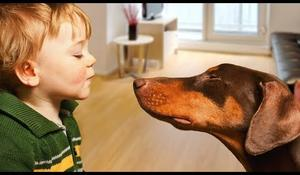 Doberman Protects Baby Compilation