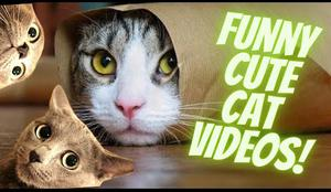 Outrageously Funny Cute Cat Videos compilation